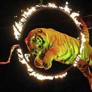 Цирки Азова