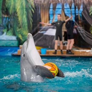 Дельфинарии, океанариумы Азова