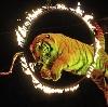 Цирки в Азове