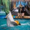 Дельфинарии, океанариумы в Азове
